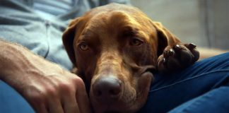 Brett Eldridge has released a video about the love of his dog