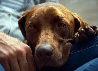 Бретт Элдридж выпустил клип о любви к своей собаке