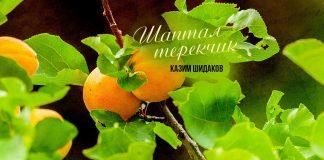 A new single by Kazim Shidakov, Shaptal Terekchyk, has been released