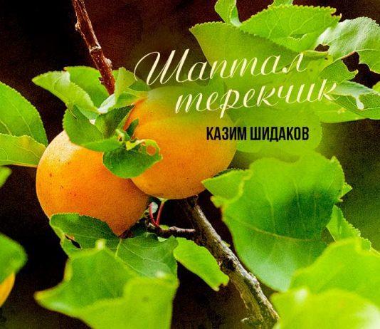 В свет вышел новый сингл Казима Шидакова «Шаптал терекчик»
